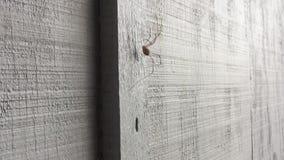 Αράχνη που αναρριχείται στον τοίχο φιλμ μικρού μήκους