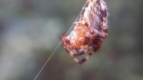 Αράχνη που ζει στα ξύλα στοκ εικόνες