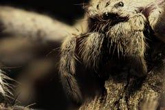 Αράχνη που περιμένει τη θανάτωση Στοκ φωτογραφία με δικαίωμα ελεύθερης χρήσης
