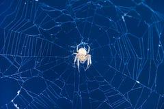Αράχνη που περιμένει το θήραμά του στον Ιστό Στοκ Εικόνες