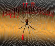 Αράχνη σε έναν Ιστό αραχνών σε ένα υπόβαθρο Στοκ Εικόνες