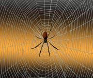 Αράχνη σε έναν Ιστό αραχνών σε ένα υπόβαθρο Στοκ Φωτογραφία
