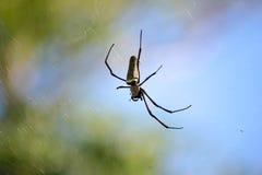 Αράχνη σε έναν Ιστό αραχνών με ένα πράσινο υπόβαθρο Στοκ Φωτογραφίες
