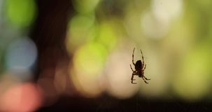 Αράχνη σε έναν Ιστό σε μια ξύλινη καλύβα τηλεοπτικό 4k απόθεμα βίντεο