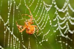 Αράχνη σε έναν Ιστό Στοκ Εικόνες