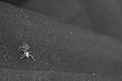 Αράχνη στην πόρτα Στοκ εικόνα με δικαίωμα ελεύθερης χρήσης