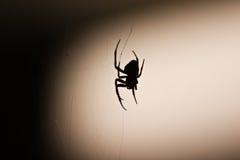 Αράχνη στη σκιαγραφία Ιστού Στοκ Εικόνα