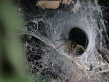 Αράχνη στη φωλιά Στοκ φωτογραφία με δικαίωμα ελεύθερης χρήσης