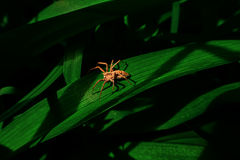 Αράχνη στις σκιές Στοκ Εικόνα