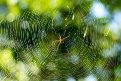 Αράχνη στον ιστό αράχνης στον κήπο στοκ εικόνες