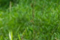 Αράχνη στον ιστό αράχνης στον κήπο στοκ φωτογραφία με δικαίωμα ελεύθερης χρήσης