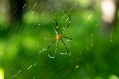 Αράχνη στον ιστό αράχνης στον κήπο στοκ φωτογραφίες