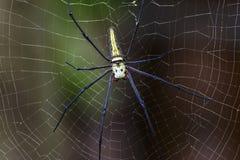 Αράχνη στον ιστό αράχνης Στοκ Φωτογραφίες