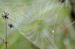 Αράχνη στον ιστό αράχνης Στοκ φωτογραφία με δικαίωμα ελεύθερης χρήσης