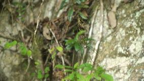 Αράχνη στον Ιστό Στοκ Φωτογραφία