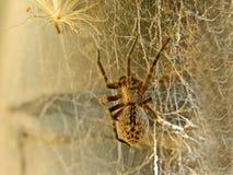 Αράχνη στον Ιστό 2 στοκ εικόνα