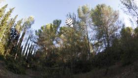 Αράχνη στον Ιστό Στοκ φωτογραφία με δικαίωμα ελεύθερης χρήσης