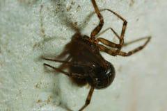 Αράχνη στον τοίχο Στοκ εικόνες με δικαίωμα ελεύθερης χρήσης