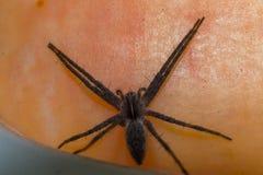 Αράχνη στο δέρμα Στοκ Εικόνες