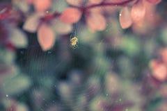 Αράχνη στο θάμνο Στοκ Εικόνες