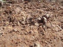 Αράχνη στο ισόγειο στοκ φωτογραφίες με δικαίωμα ελεύθερης χρήσης