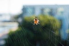 Αράχνη στο κέντρο του Ιστού του Στοκ Εικόνες