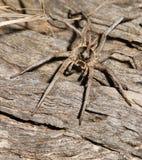 Αράχνη στο κούτσουρο Στοκ εικόνες με δικαίωμα ελεύθερης χρήσης