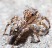 Αράχνη στο πάτωμα Στοκ εικόνες με δικαίωμα ελεύθερης χρήσης
