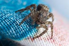 Αράχνη στο σπίτι Στοκ φωτογραφία με δικαίωμα ελεύθερης χρήσης