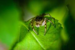 Αράχνη στο φύλλο Στοκ Φωτογραφίες