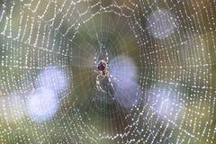 Αράχνη στο autum Στοκ Φωτογραφίες