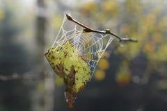 Αράχνη στο spiderweb Δροσιά πρωινού και φύλλο φθινοπώρου στοκ φωτογραφίες