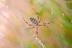 Αράχνη στο spiderweb Στοκ εικόνα με δικαίωμα ελεύθερης χρήσης