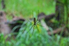 αράχνη Ταϊλανδός Στοκ φωτογραφία με δικαίωμα ελεύθερης χρήσης
