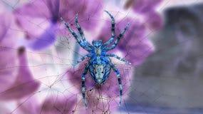 Αράχνη της Zen στοκ εικόνες