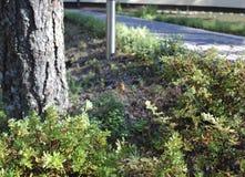 Αράχνη φθινοπώρου στον Ιστό αραχνών στον κήπο Στοκ φωτογραφίες με δικαίωμα ελεύθερης χρήσης