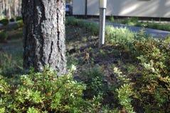 Αράχνη φθινοπώρου στον Ιστό αραχνών στον κήπο Στοκ Φωτογραφία