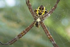 αράχνη 2 Στοκ Εικόνες