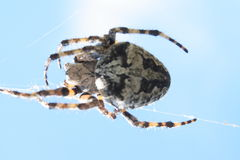 αράχνη Στοκ φωτογραφίες με δικαίωμα ελεύθερης χρήσης