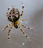 Αράχνη. Στοκ φωτογραφία με δικαίωμα ελεύθερης χρήσης