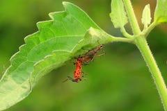 Αράχνη Στοκ εικόνες με δικαίωμα ελεύθερης χρήσης