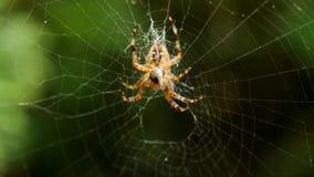 Αράχνη απόθεμα βίντεο