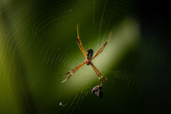 Αράχνη Στοκ Εικόνες