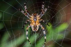 Αράχνη - diadematus Araneus Στοκ φωτογραφία με δικαίωμα ελεύθερης χρήσης