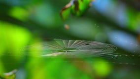 Αράχνη Spiderweb που πιάνει το φως του ήλιου Bokeh Backgroung πρωινού απόθεμα βίντεο