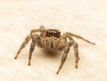 Αράχνη V3 Στοκ φωτογραφίες με δικαίωμα ελεύθερης χρήσης