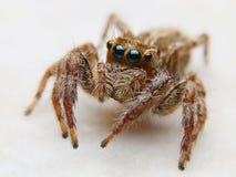 Αράχνη V2 Στοκ Φωτογραφίες