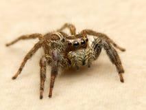 Αράχνη V1 Στοκ Εικόνα