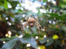 Αράχνη wincy Incy Στοκ εικόνα με δικαίωμα ελεύθερης χρήσης