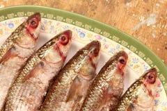 Αραβικά αιγυπτιακά αλατισμένα ψάρια Στοκ Φωτογραφία